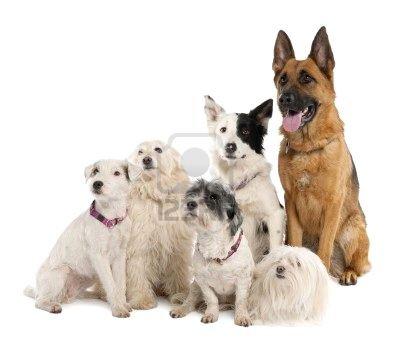voila jais commence  toiléttage frimousse a domicile  pour chien et chevaux  contacter mois pour le bien étre de votre animal sans vous déplacer de chez vous .   les toutou alleé voire vaux maitre  pour le dire toiléttage frimousse qui vient chez vous