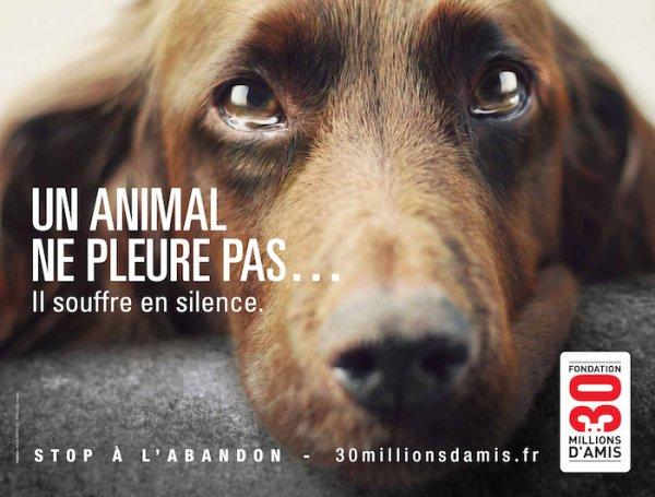 Remixer , pour le bien des animaux et de notre terre !!!!!!!!!!