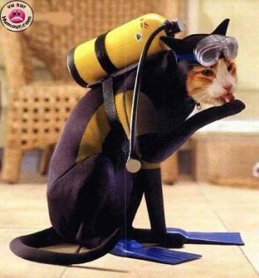 lol pas mal le plongeur j espere qu il a eu du poissons mdr