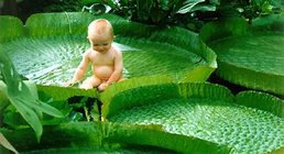 jolie petite grenouille ;)