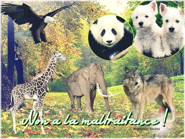NON A LA MALTRAITANCE DES ANIMAUX !