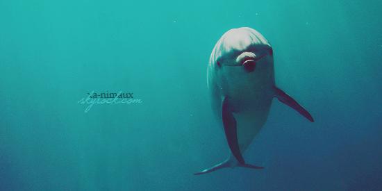 Les delphinariums.