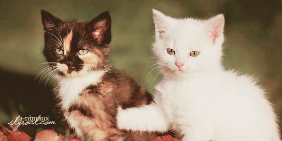 Chatons et chiots torturés puis tués, le crush kitten et puppy.