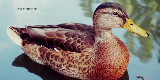Le foie gras.