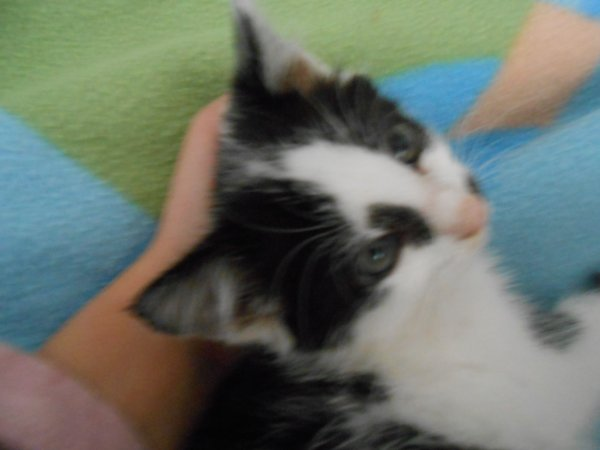 Zoe ma petite chatte.