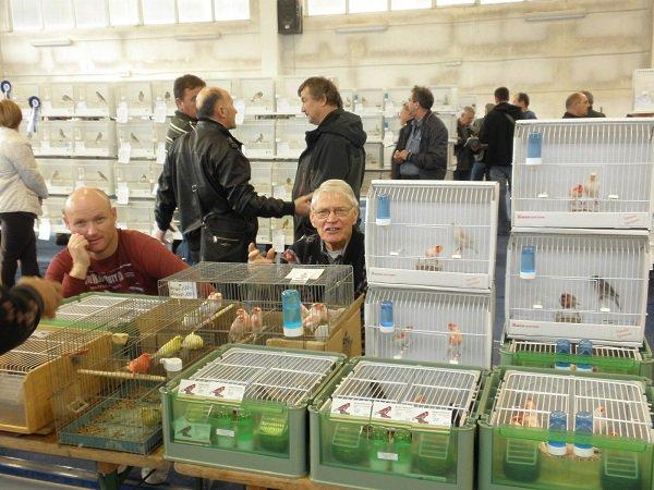 5 middle europe birds show   Rijeka