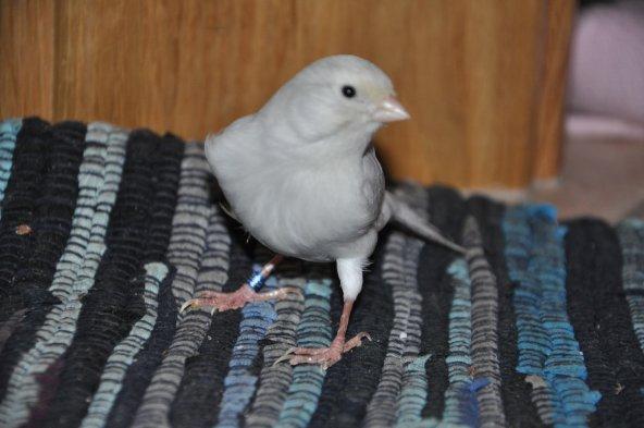 Agate opal blanc AOB LI 499 085 2011