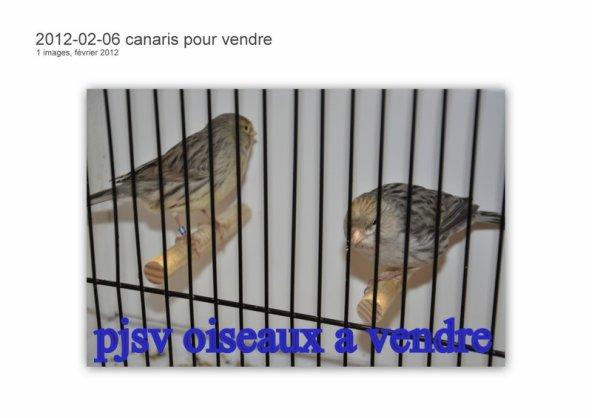 oiseaux a vendre