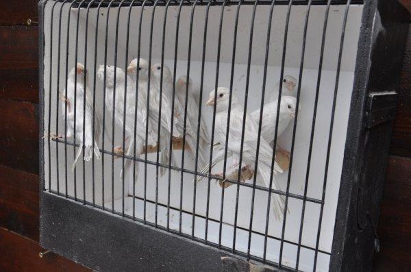 Jeunes opale blanc 2012