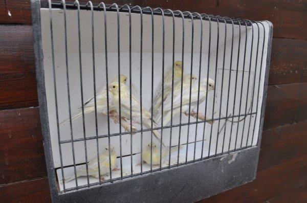 Jeunes opale mosaique jaune 2012