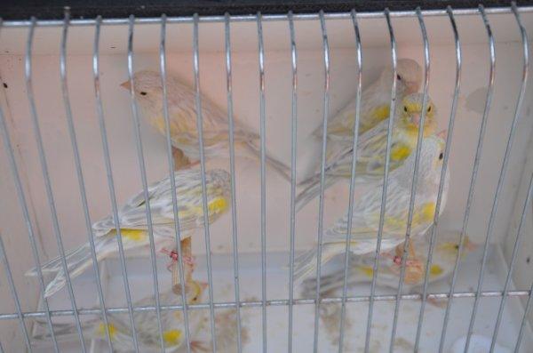 agate opale blac mosaique jaune