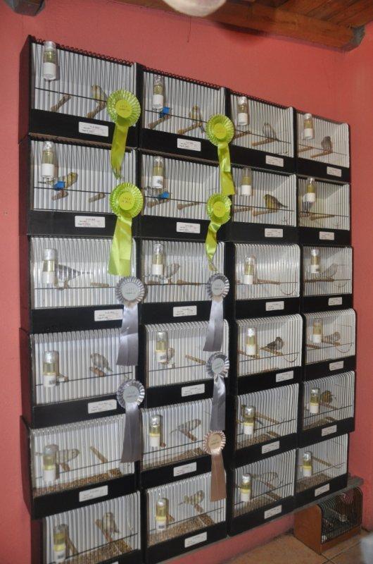 Les oiseaux presentée à l'expo.