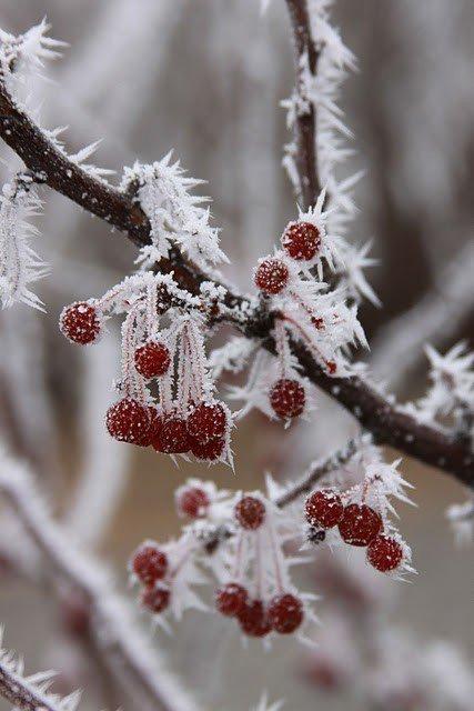 même l'hivers on peux découvrir de si belle chose à apprécié