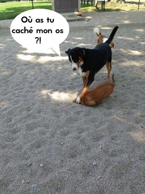 la mafia canine lol