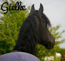 Photo de gielke-my-friesian