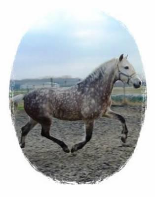 T'as un cheval ??