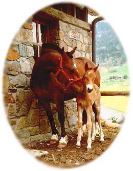 Le cheval comprend plus facilement l'homme que l'homme ne comprend le cheval. On peut donc se demander si le cheval n'est pas largement supérieur à l'homme