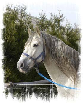 """""""Tous les chevaux valent de l'or """""""