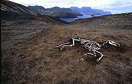 Mort d'un cheval