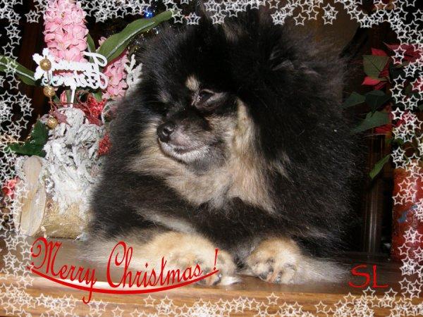 Joyeux Noël à tous !