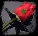 Photo de el-omari--Loves3