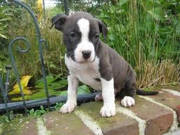 mon future chien