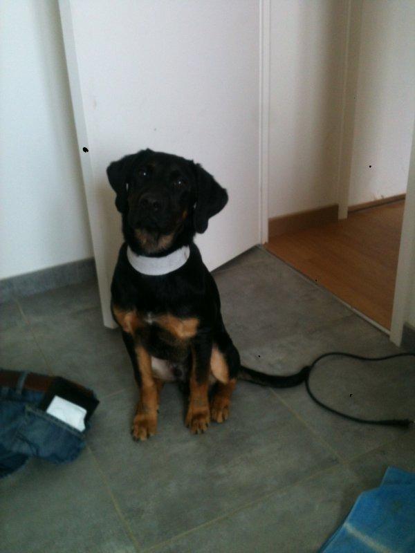 Black a 4 mois et demi il fait 14 kilos