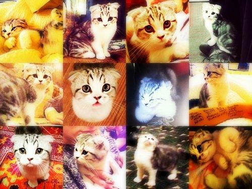 Taylor & les chats .