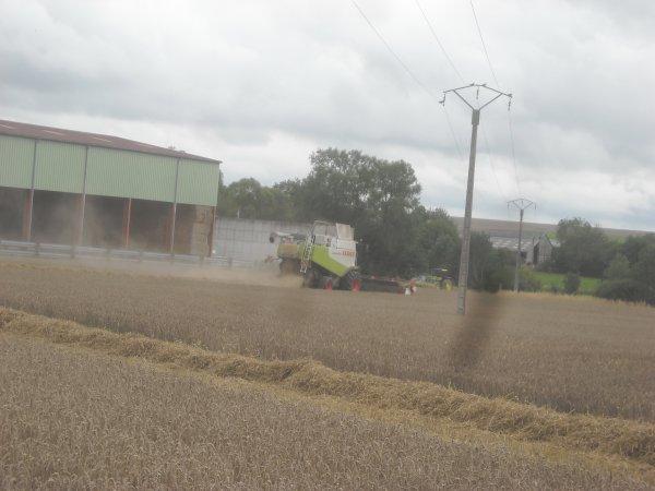 Chantier de blé .