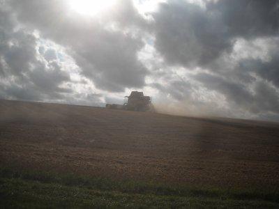 Chantier de blé en grande largeur fin.