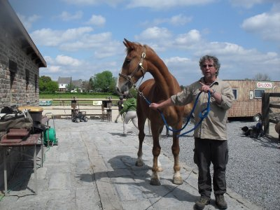 nos grand chevaux <3