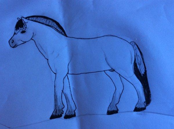 Mon 1er dessin Schleich(étalon fjord 2014)