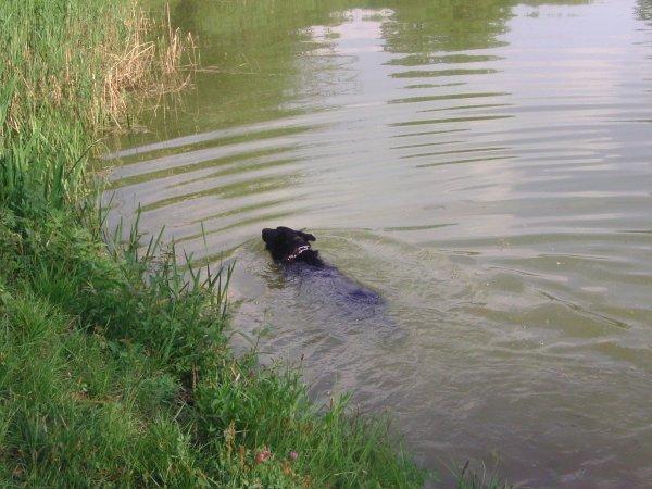 kaizeur dans le lac