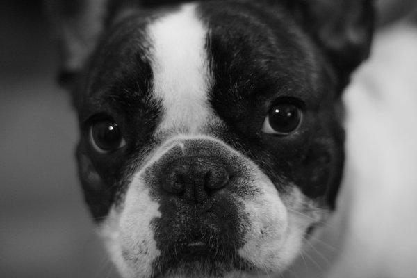 #. 1 Dogue-Boule