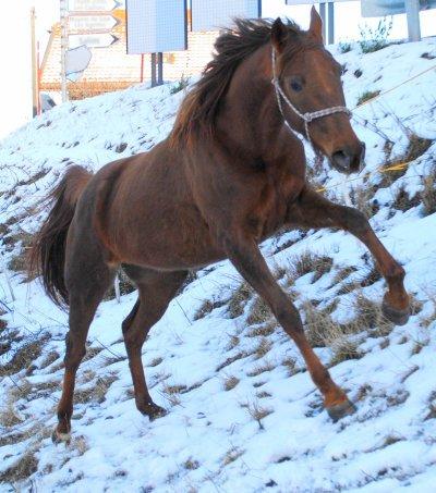 Cours du mardi 23 février 2010