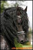 Photo de chevalgirl105