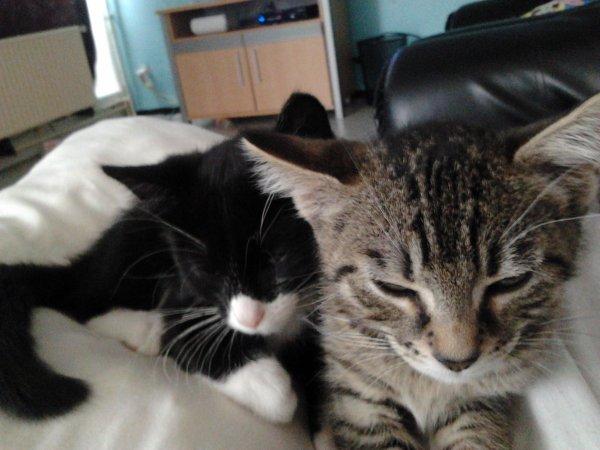 mes deux petit chaton chaussette et vagabon