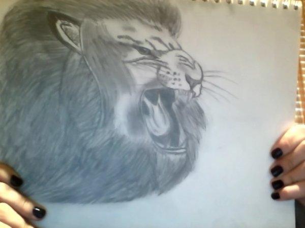 Lion <3 mon plus beau a vie!!!!!