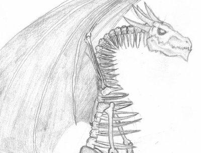 Dragon squelette blog de kamhai carnet de dessin - Dessin de squelette ...
