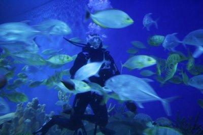 la vie  sous l eau!!!!!