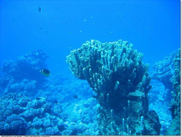Tahiti fond marin!!!!