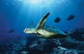 Superbe photo de tortue!!!