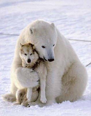 Aide cet ours et ce loup à faire le tour du monde !!!!
