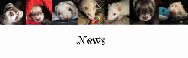 Toutes les news