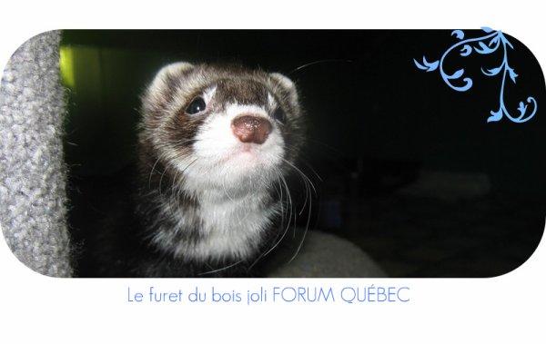 Un forum super