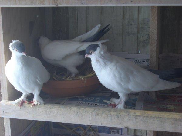 couple de culbutants krymka bleus et leur jeune
