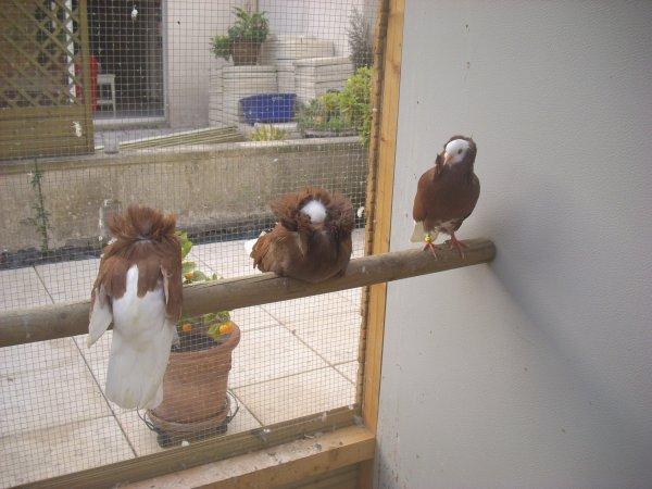 nouveau pigeonnier