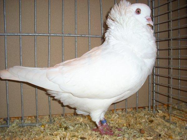 quelques photos de la 29ème exposition avicole de CARVIN les 3 et 4 novembre 2012