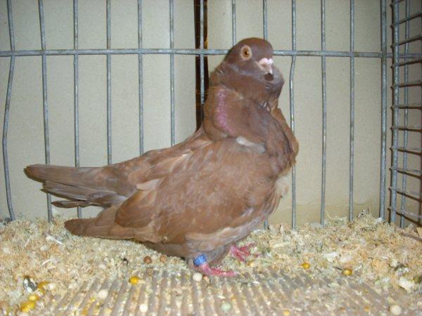 suite des photos de la 29ème exposition avicole de CARVIN