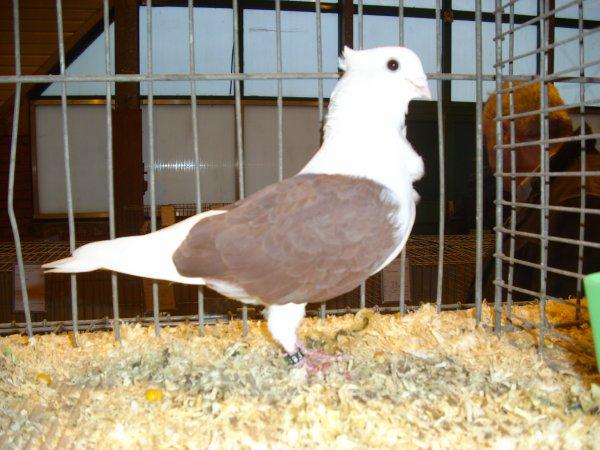 suite et fin des photos de la 29ème exposition avicole de CARVIN